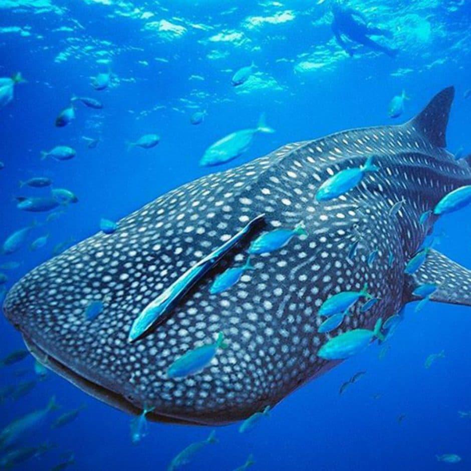 Les plus beaux spots de plongée aux Maldives