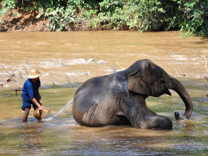 un camps d'éléphants dans votre circuit en thaïlande à chiang mai